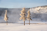 20150131 Yellowstone Momouth Springs-1
